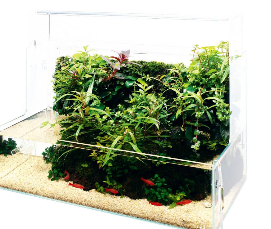 Kugelaquarium 2,5 Liter Wabi Kusa
